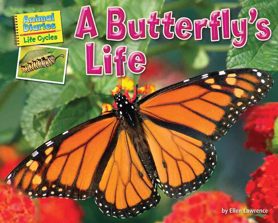 A Butterfly's Life By Lawrence, Ellen